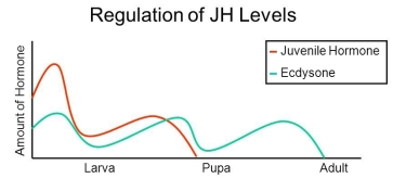 Regulation+of+JH+Levels