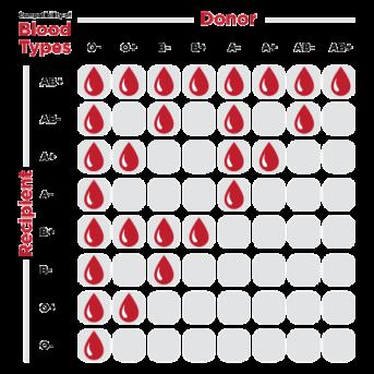 blood-compatibility-chart